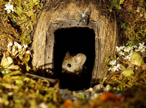 Photographer Discovers A Mice Family In His Garden And Built An Amazing Miniature Village For Them - 15