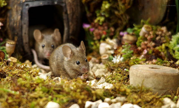 Photographer Discovers A Mice Family In His Garden And Built An Amazing Miniature Village For Them - 16
