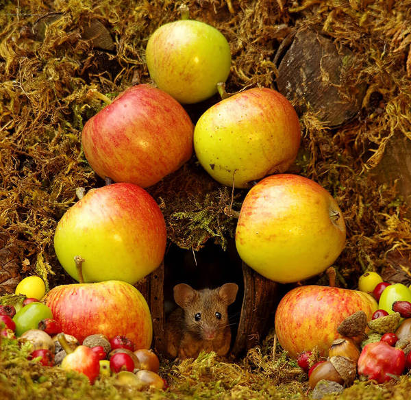 Photographer Discovers A Mice Family In His Garden And Built An Amazing Miniature Village For Them - 6