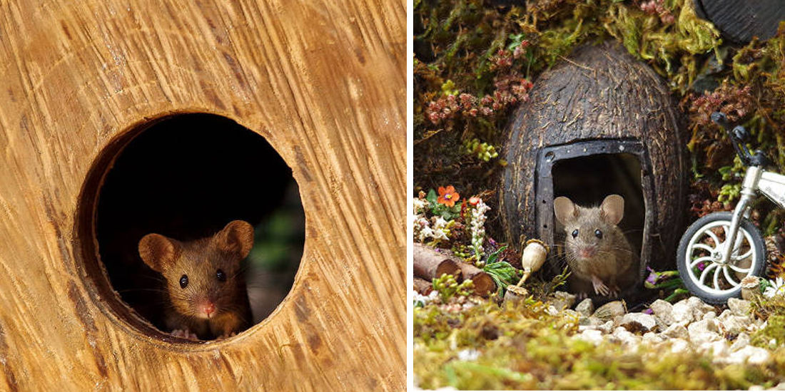 Photographer Discovers A Mice Family In His Garden And Built An Amazing Miniature Village For Them