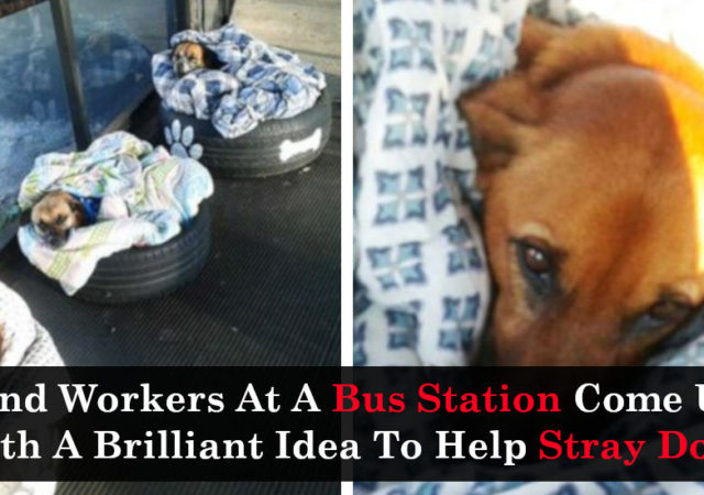 Kind Workers At A Bus Station Come Up With A Brilliant Idea To Help Stray Dogs