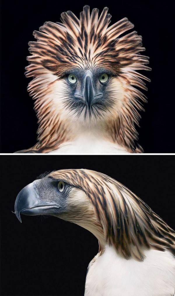 1. Philippine Eagle