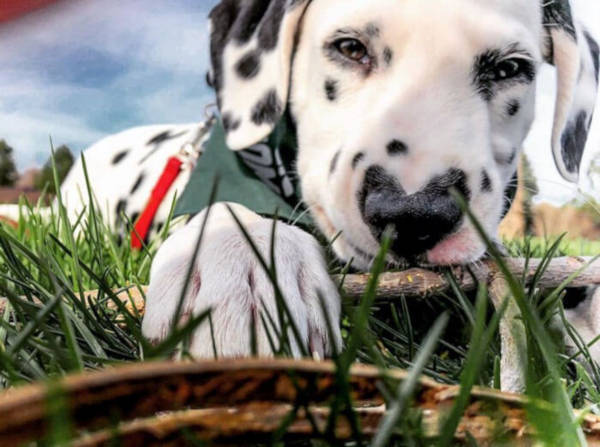 14. Another close-up of Wiley, relaxing on the field.