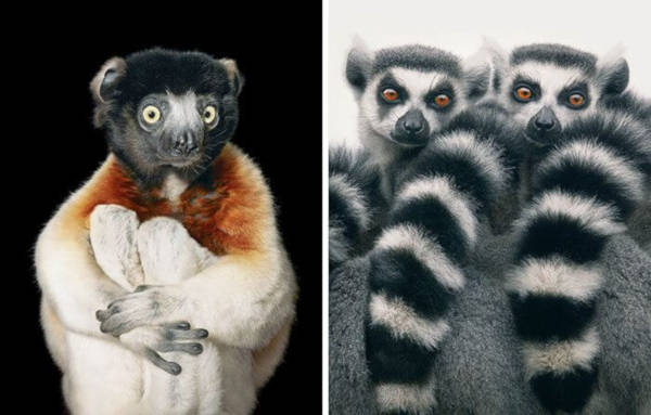3. Ring-Tailed Lemur