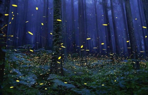 5. Fireflies