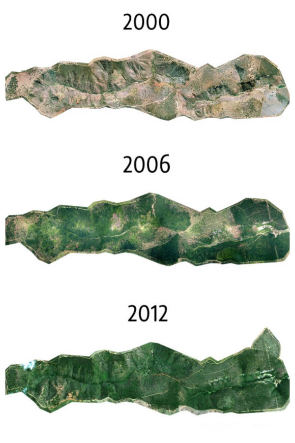 Amazing Images Of 20-Year Reforestation Project - 1