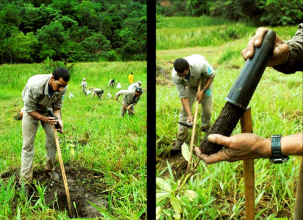 Amazing Images Of 20-Year Reforestation Project - 6