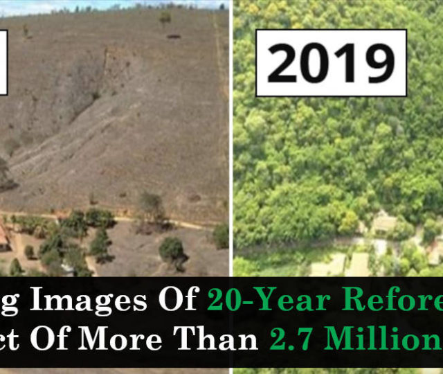 Amazing Images Of 20-Year Reforestation Project Of More Than 2.7 Million Trees