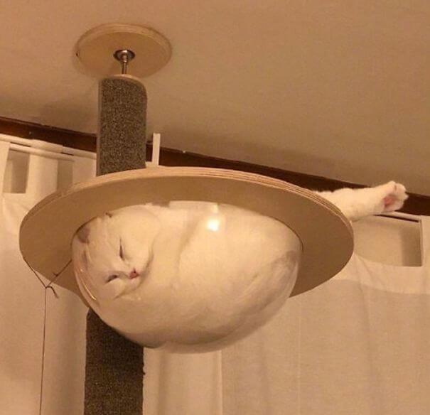 3. Cat Bowl