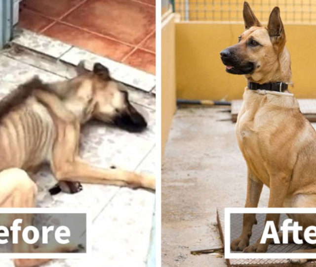 30 Heartwarming Before And After Photos Of Rescued Dogs