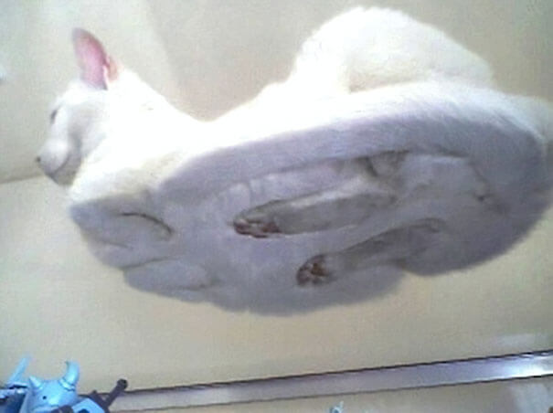 6. Hover Cat
