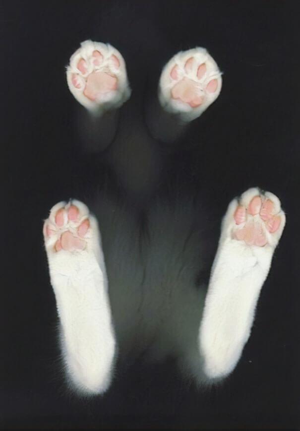 7. Paws