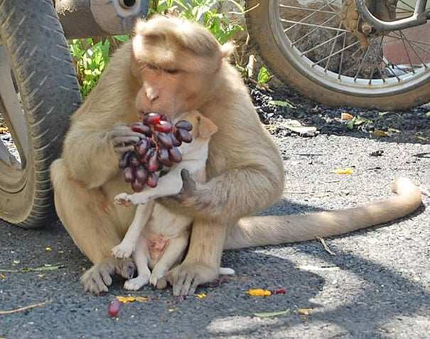 A Monkey Adopts A Puppy, Defends It From Stray Dogs And Acts Like Its Natural Parent - 2
