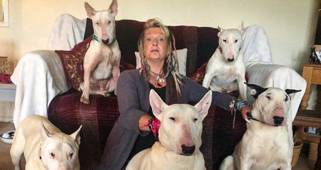 Man Makes His Wife Choose Between Her Dogs And Him, She Decides To Stay With The Dogs