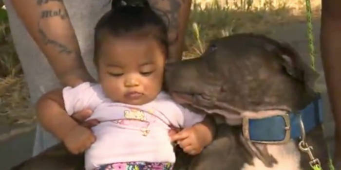 Pit Bull Saves Baby And The Whole Family From Burning House - 2