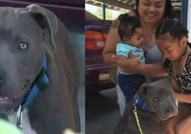 Pit Bull Saves Baby And The Whole Family From Burning House