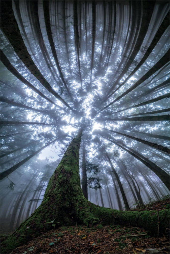 Photographer Capture Trees With A Worm's Eye View And The Result Is Beautiful - 1