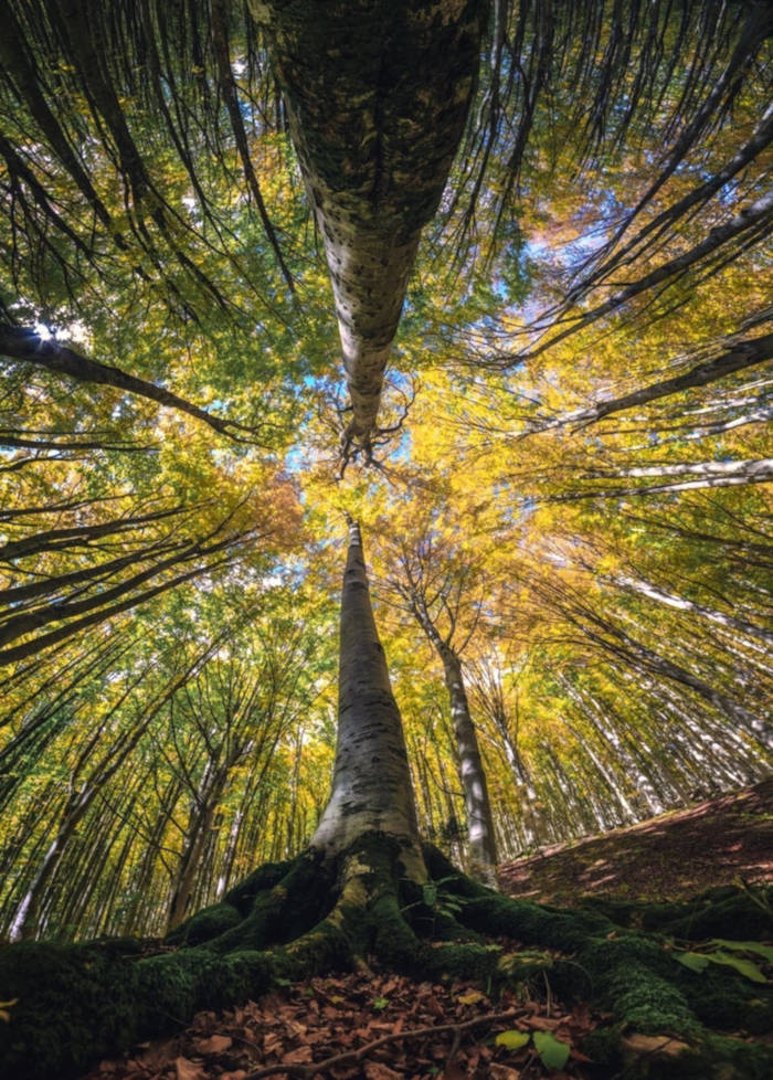Photographer Capture Trees With A Worm's Eye View And The Result Is Beautiful - 3