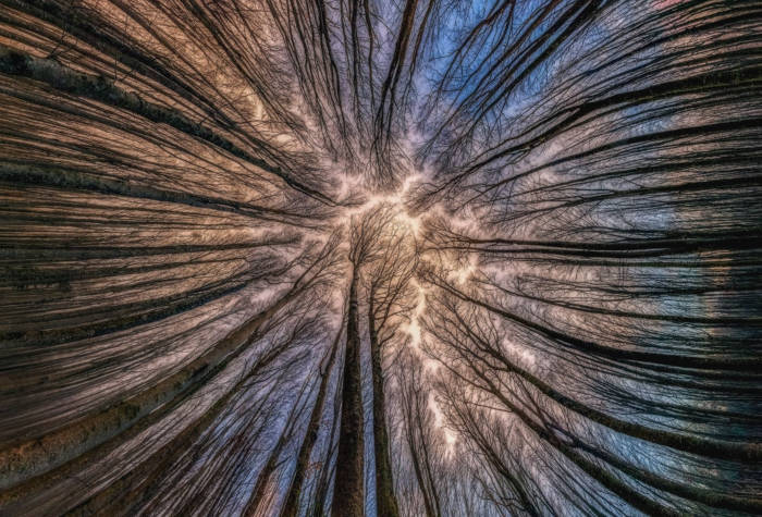 Photographer Capture Trees With A Worm's Eye View And The Result Is Beautiful - 4