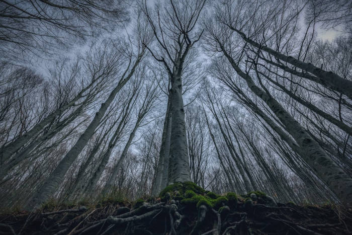 Photographer Capture Trees With A Worm's Eye View And The Result Is Beautiful - 5