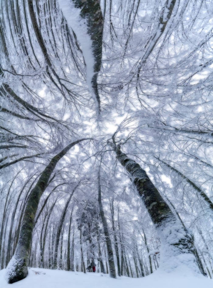 Photographer Capture Trees With A Worm's Eye View And The Result Is Beautiful - 6