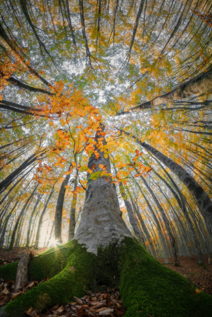 Photographer Capture Trees With A Worm's Eye View And The Result Is Beautiful - 7