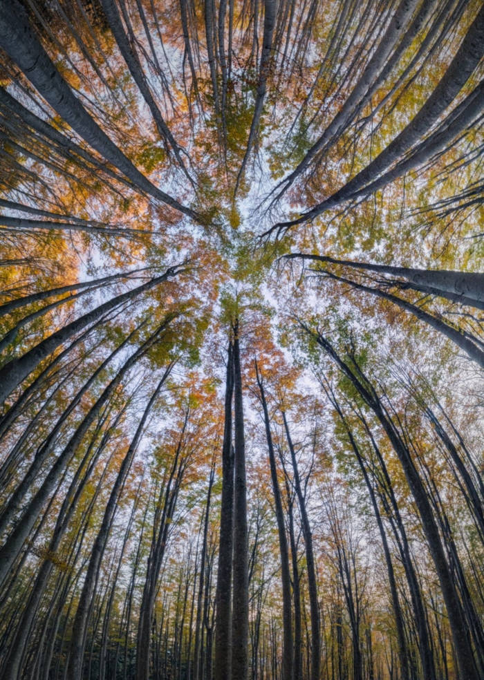 Photographer Capture Trees With A Worm's Eye View And The Result Is Beautiful - 9