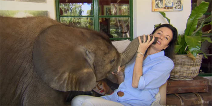Woman Saves Moyo The Elephant From Death And Now They Are Inseperable - 1