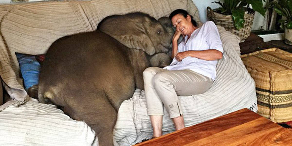 Woman Saves Moyo The Baby Elephant From Death And Now They Are Inseperable