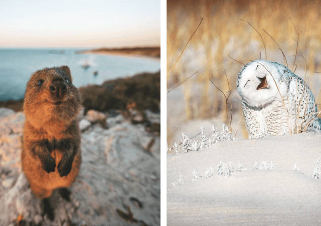Adorable Photos From The 2019 Comedy Wildlife Photography Awards