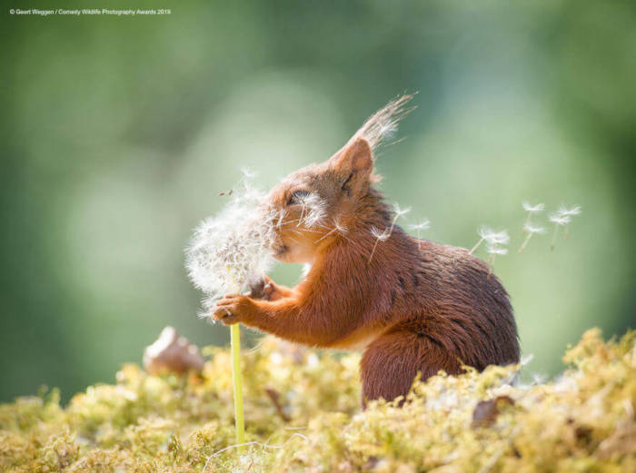 Adorable Photos From The 2019 Comedy Wildlife Photography Awards - 9