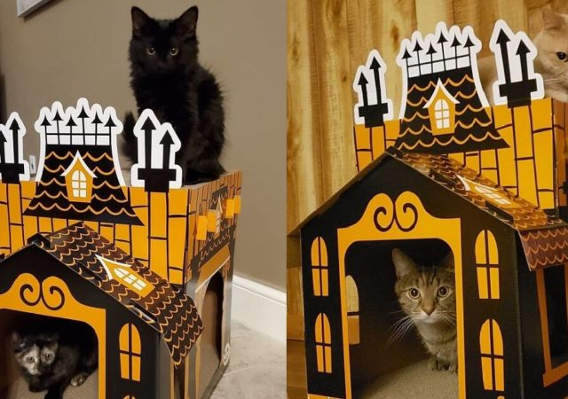 Get This Mini Haunted House From Target To Celebrate Halloween With Your Cat