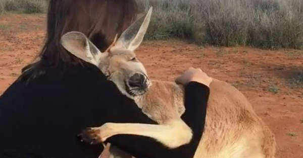 Rescued Kangaroo Can't Stop Hugging The Volunteers Who Saved Her Life 1