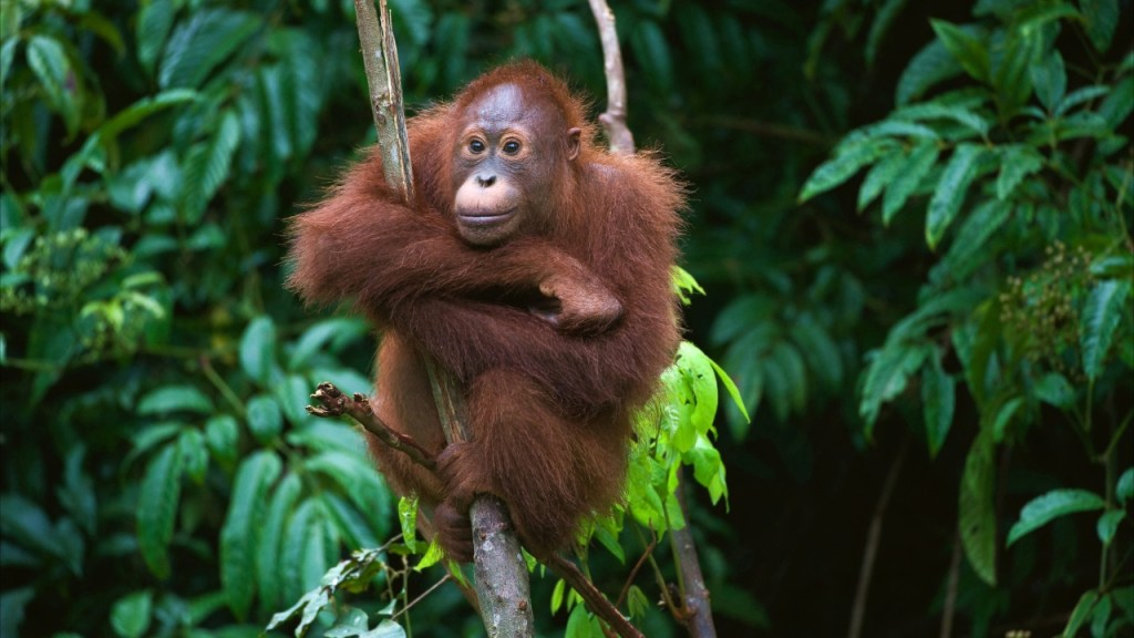 norway-is-the-first-country-in-the-world-to-ban-deforestation